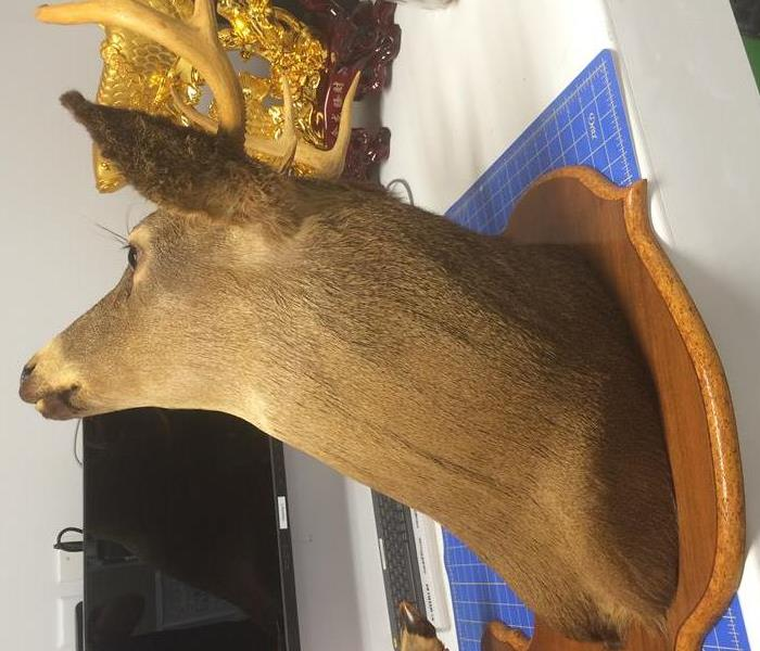 a picture of a taxidermy deer head on a wood plaque