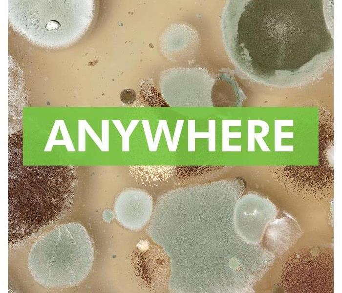 "mold colonies with the word ""Anywhere"""