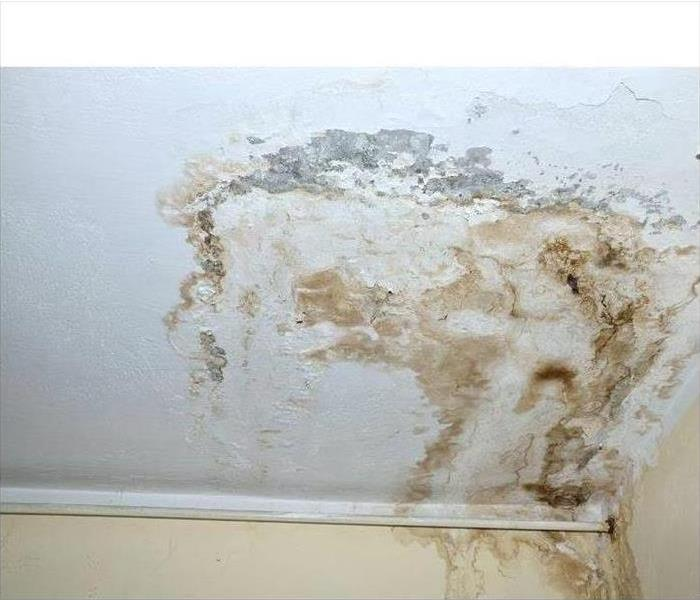Mold Remediation Mold Prevention Tips